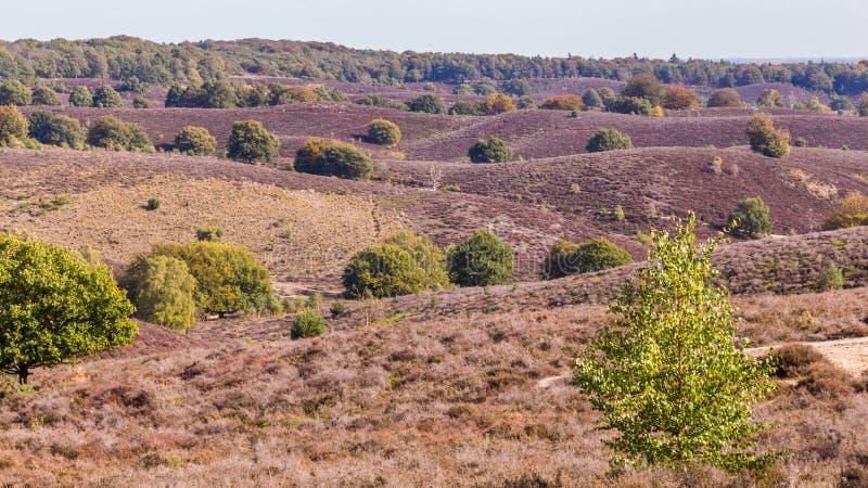 Parco nazionale Posbank Veluwe Paesi Bassi immagini stock