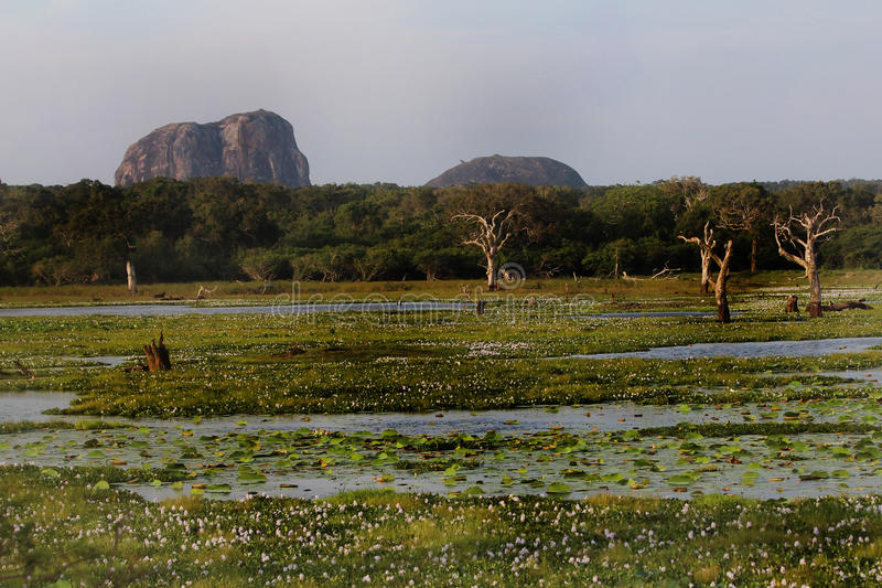 Parco nazionale Yala fotografia stock