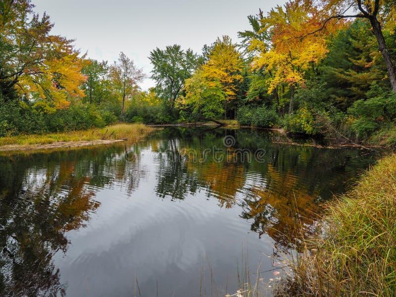 Parco provinciale di Autumn Fall Color Marsh Bonnechere fotografia stock libera da diritti