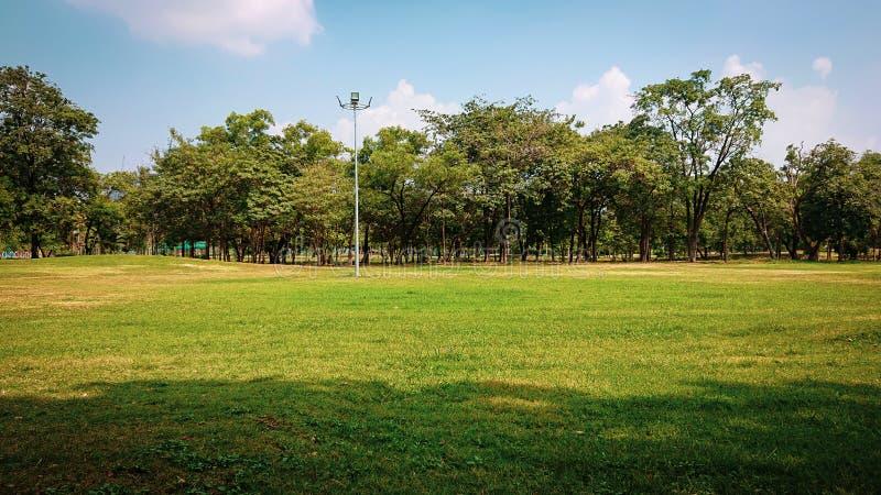 Parco pubblico con erba verde, albero tropicale immagine stock