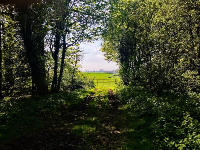 Parco reale dei cervi di Studley fotografia stock libera da diritti