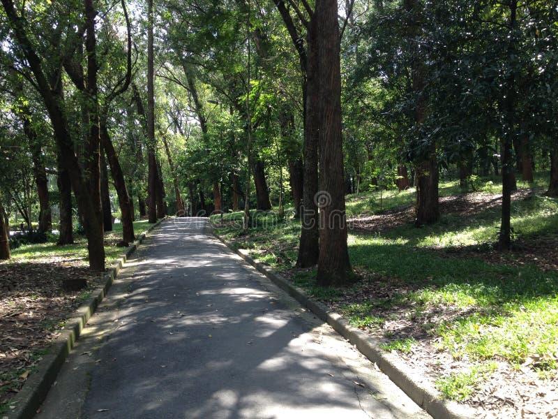 Parco, Sao Paulo, percorso, natura, mattina fotografia stock