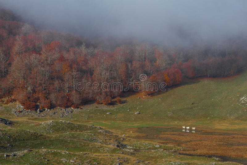 Parco Trekking Nazionale D'Abruzzo fotografia de stock