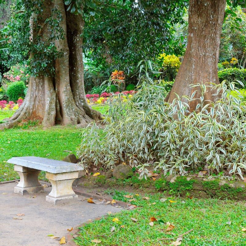 Parco tropicale con gli alberi ed i fiori In un posto isolato è un banco di pietra per resto immagini stock libere da diritti