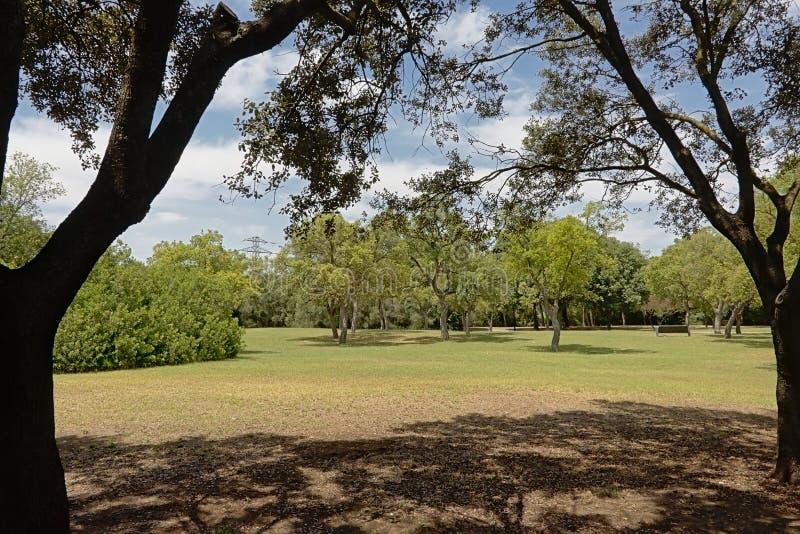 Parco urbano di Alamillo del di Parque, Siviglia, Spagna immagine stock