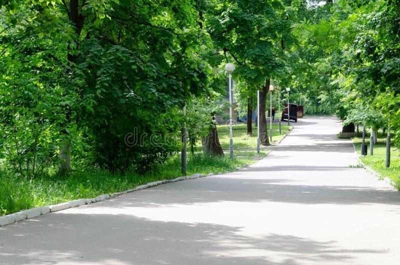 Parco verde con la strada, vicolo degli alberi fotografia stock libera da diritti