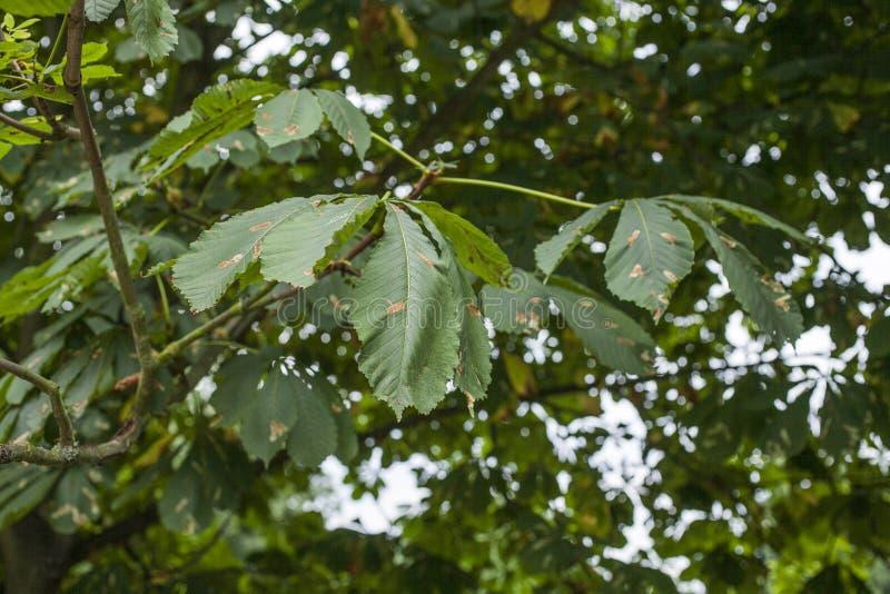 Parcs à Londres, Angleterre ; branches pleines des feuilles vertes photographie stock