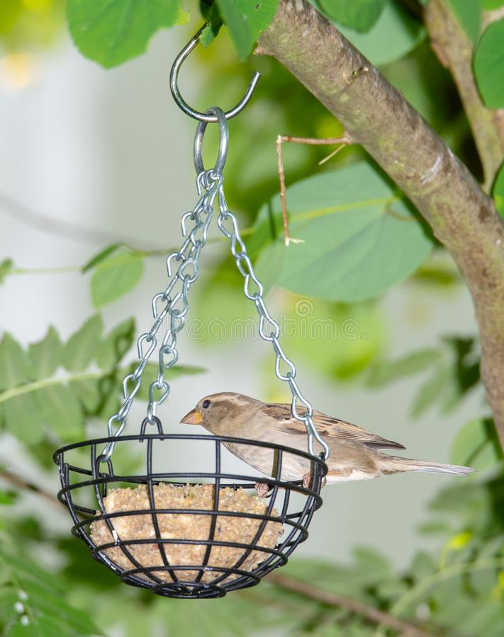 Pardal em um alimentador do pássaro foto de stock royalty free