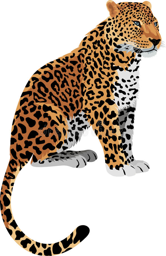Pardus пантеры леопарда вектора иллюстрация вектора