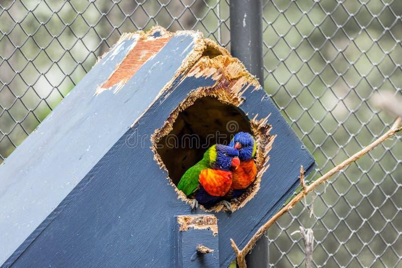 Pare dos papagaios fotos de stock