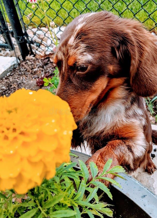 Pare para cheirar as flores imagens de stock