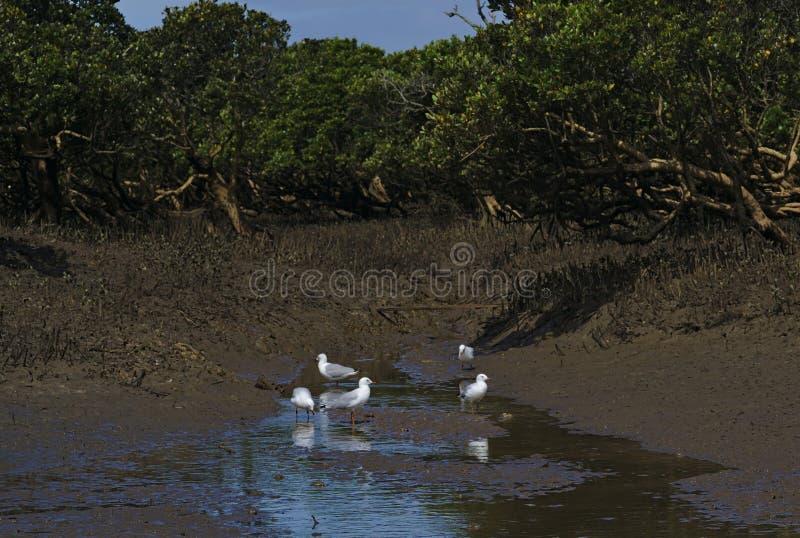 Parecchi gabbiani bianchi e grigi su acqua fotografia stock libera da diritti