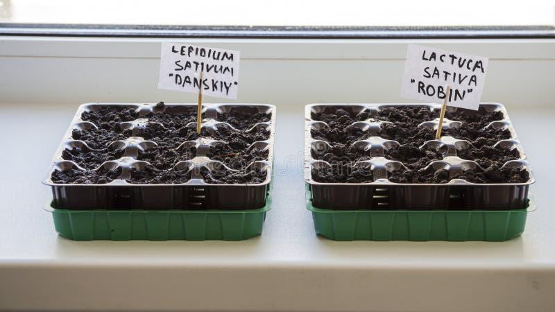 Parecchi recipienti di plastica con il suolo del giardino Piantina-immagine piantata immagine stock libera da diritti