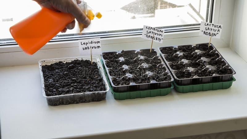 Parecchi recipienti di plastica con il suolo del giardino Piantina-immagine piantata fotografie stock
