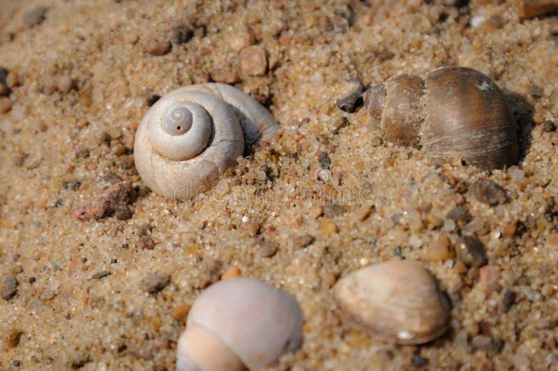 Parecchie coperture sviluppate a spirale sul primo piano della sabbia immagine stock libera da diritti
