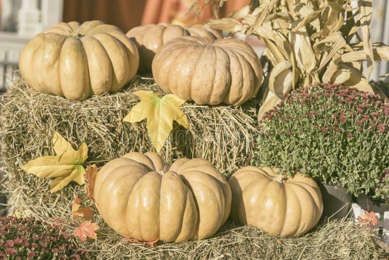 Parecchie grandi zucche organiche su paglia, sulle foglie di autunno e sui fiori asciutti Priorità bassa della raccolta Simbolo d fotografia stock libera da diritti