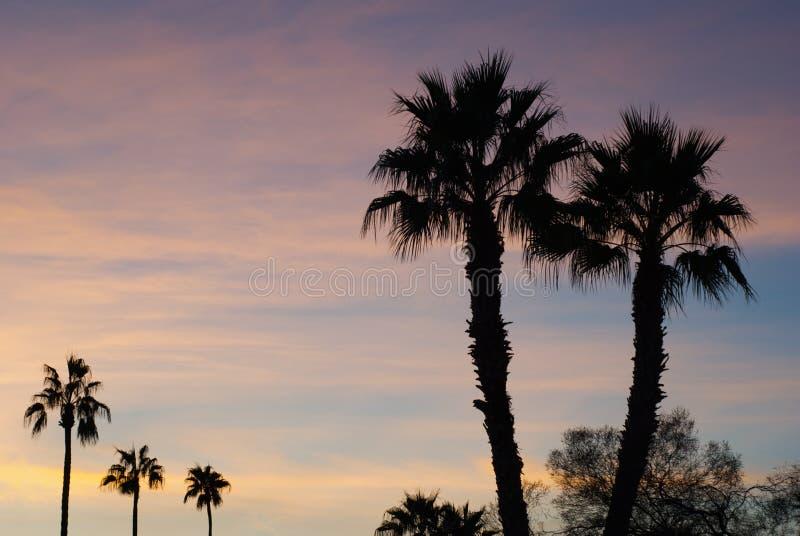 Parecchie palme nel tramonto fotografia stock libera da diritti