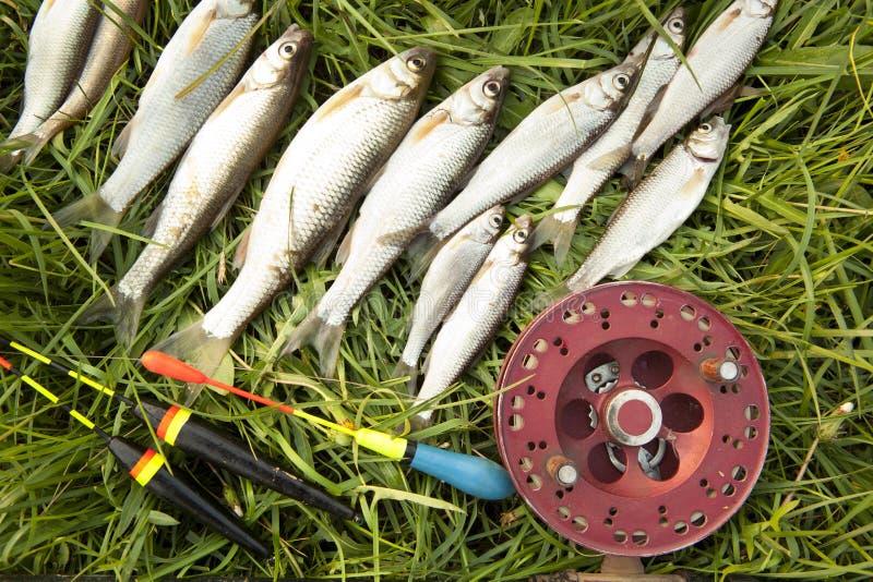 Parecchio pesce e la pesca del triotto annaspano su erba verde fotografia stock