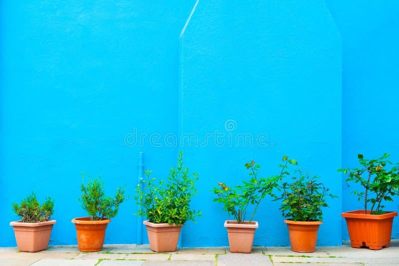 Pared azul de la casa y de las plantas verdes en los potes fotografía de archivo libre de regalías