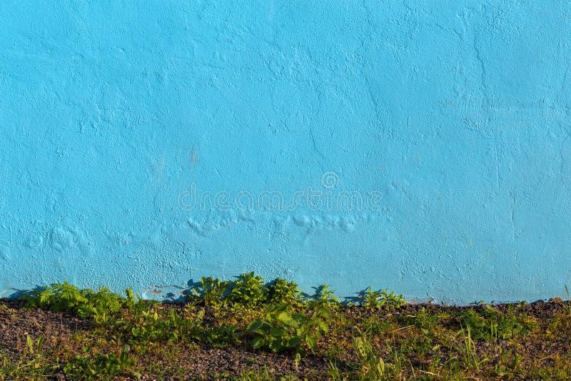 Pared azul del yeso e hierba salvaje debajo de ella fotos de archivo libres de regalías