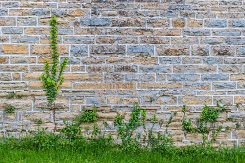 Pared con los ladrillos y las plantas coloreados imagenes de archivo