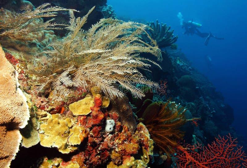 Pared coralina foto de archivo libre de regalías