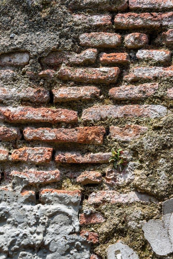 Pared de alba?iler?a resistida vieja con el ladrillo que desmenuza y muchos remiendos del cemento, como fondo texturizado imagen de archivo