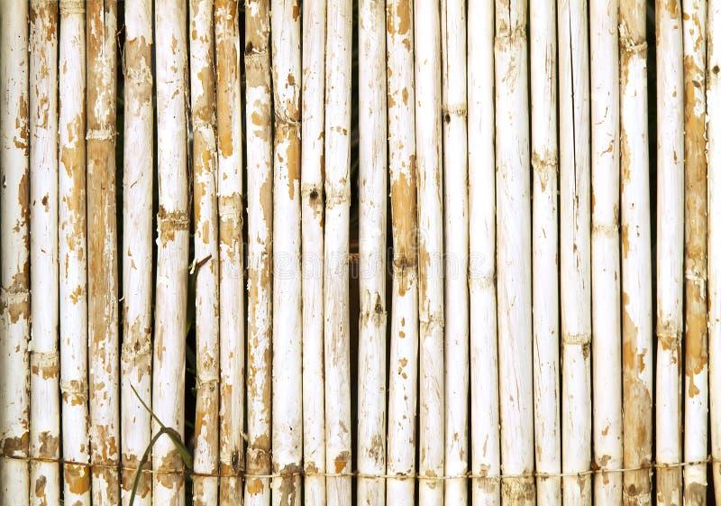 Pared de bambú con la pintura blanca resistida foto de archivo