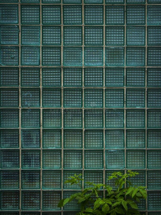 Pared de cristal de la caja y planta verde Textura Fondo fotos de archivo libres de regalías