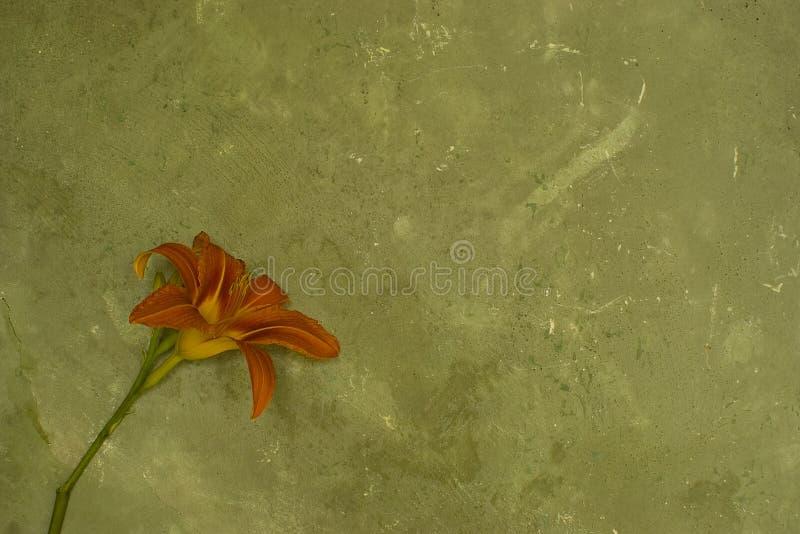 Pared de Grunge con la flor imagenes de archivo