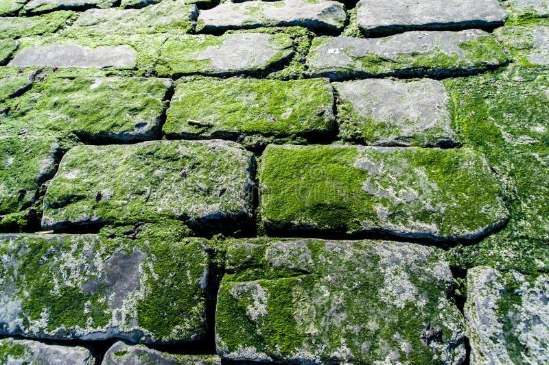 Pared de ladrillo cubierta con el musgo verde foto de archivo