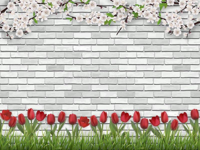 Pared de ladrillo del blanco de la hierba de la rama de árbol de tulipanes libre illustration