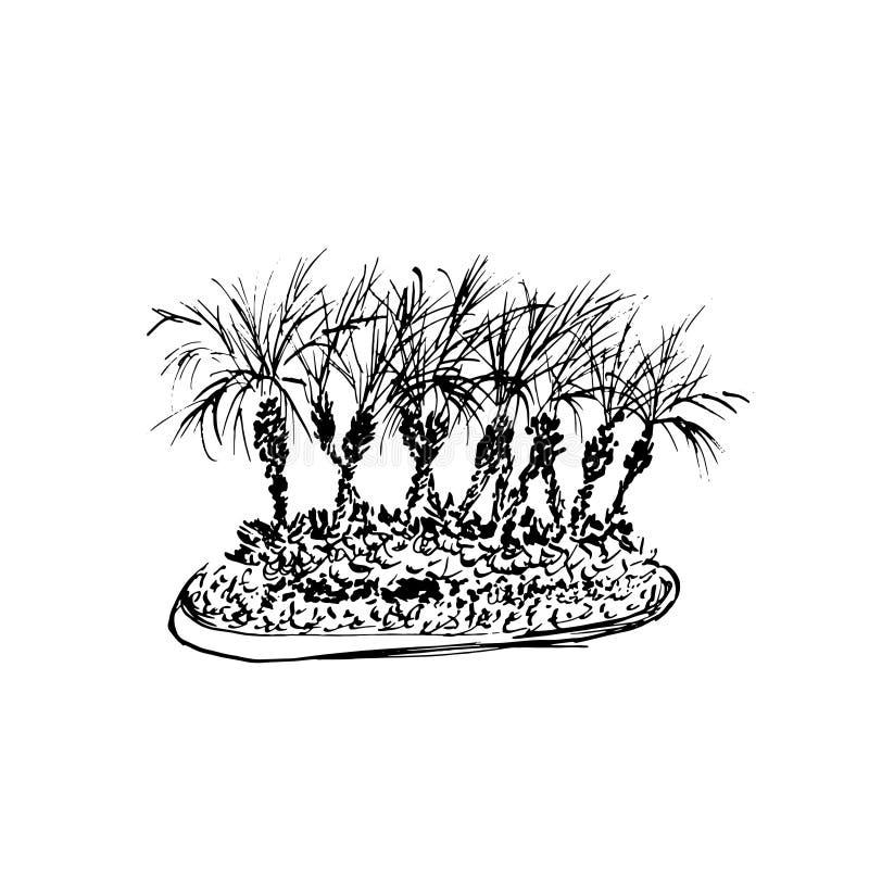 Pared de ladrillo roja Bosquejo negro aislado en el fondo blanco Ejemplo del grupo de las palmas de coco Vector drenado mano stock de ilustración