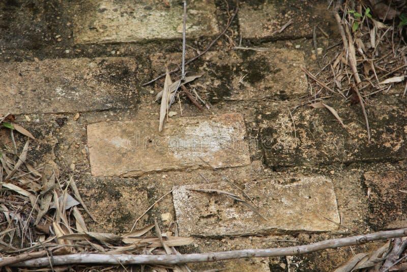 Pared de ladrillo de Rusticom con los desgates y las hojas foto de archivo libre de regalías