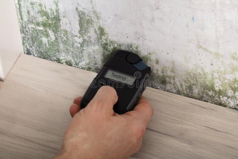 Pared de Person Hand Testing The Moldy imagenes de archivo