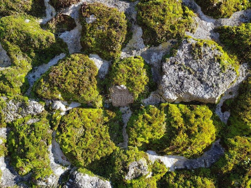 Pared de piedra con el musgo en otoño con el sol fotos de archivo