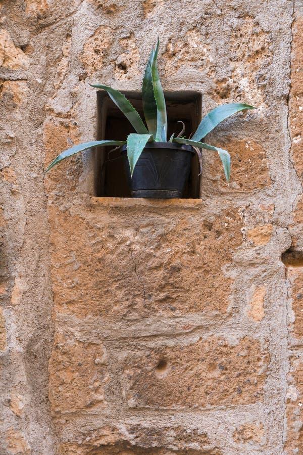 Pared de piedra roja y una planta imagen de archivo