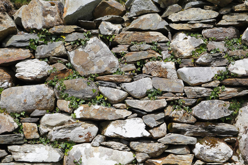 Pared de piedra vieja, con la hiedra imágenes de archivo libres de regalías