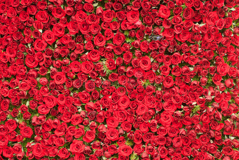 Pared de rosas imagen de archivo