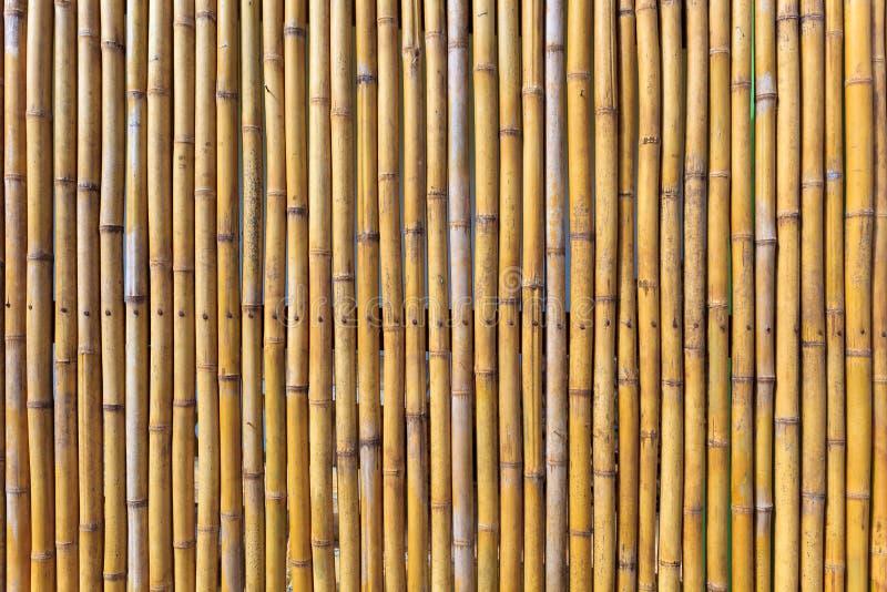 Pared del bambú amarillo fotografía de archivo libre de regalías