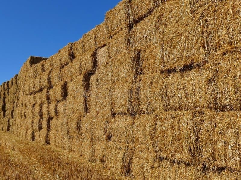 Pared hecha de las balas de heno apiladas en un campo Paisaje de la granja del verano imágenes de archivo libres de regalías