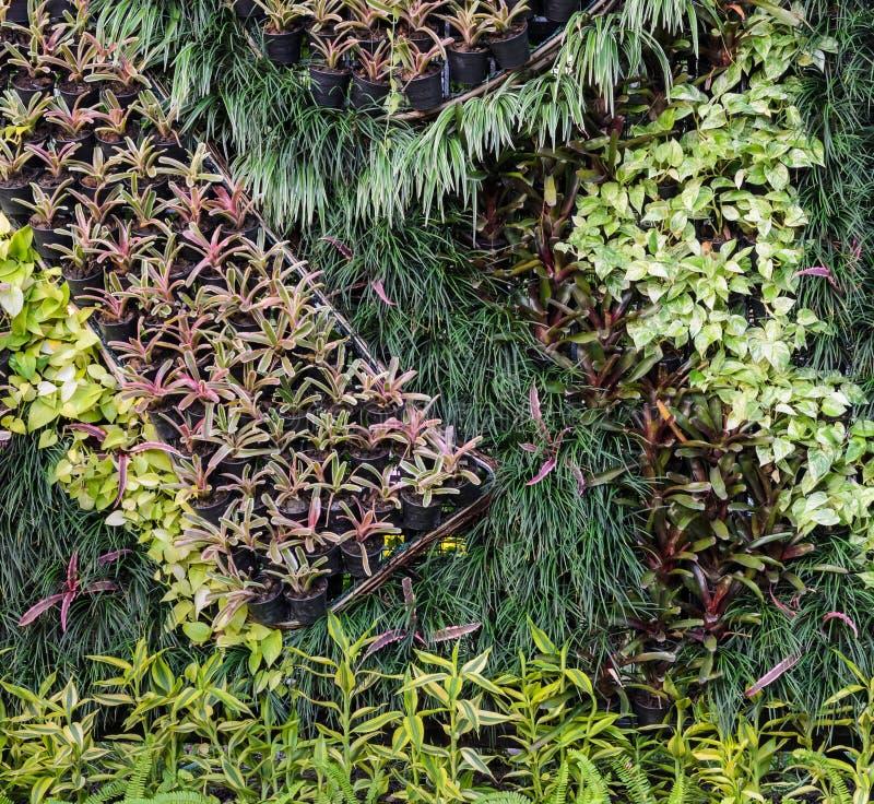 Pared hermosa del jardín del follaje imagen de archivo