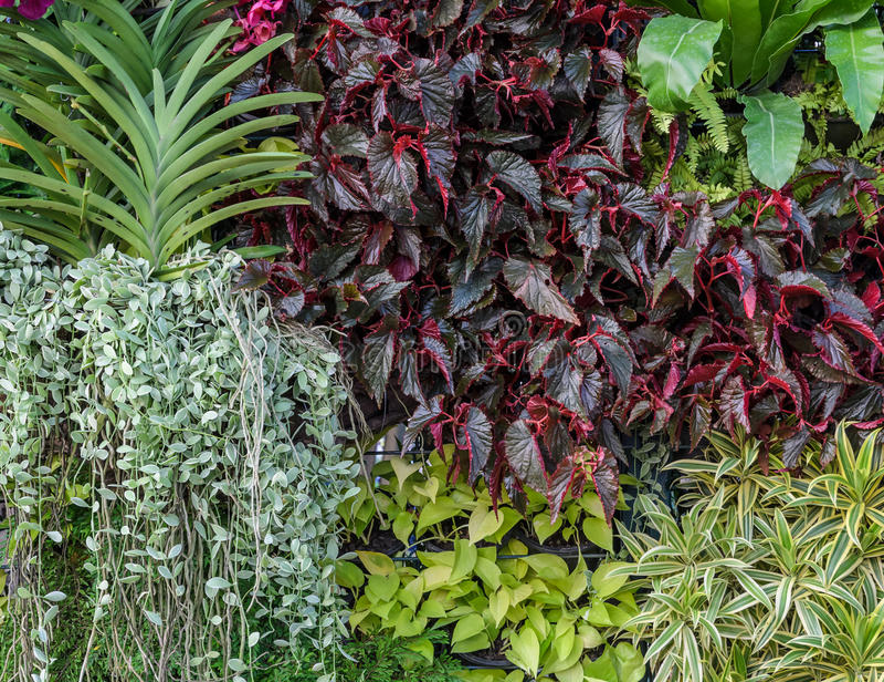 Pared hermosa del jardín del follaje imagen de archivo libre de regalías