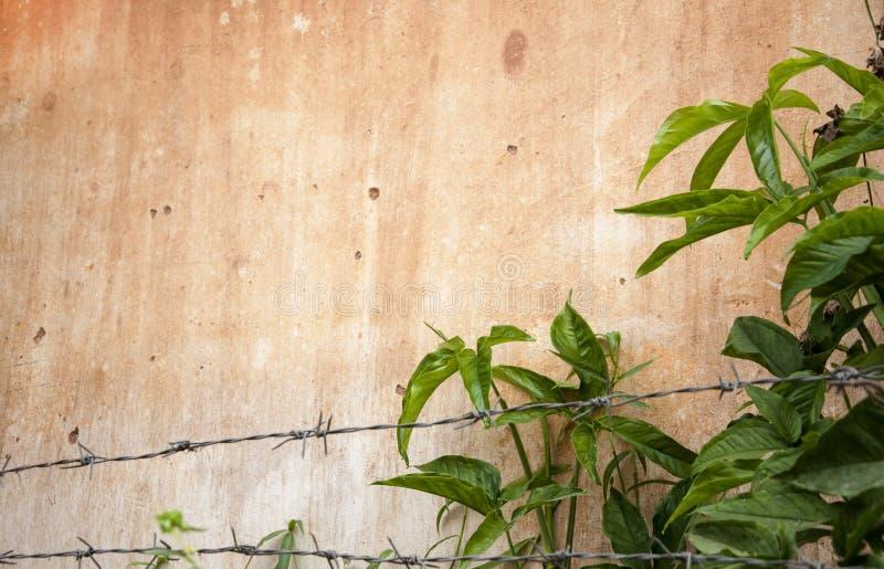 Pared manchada Grunge de la casa con las plantas verdes imagenes de archivo