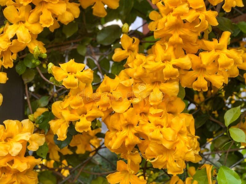 Pared natural hermosa Hojas del verde y flores amarillas fotografía de archivo libre de regalías