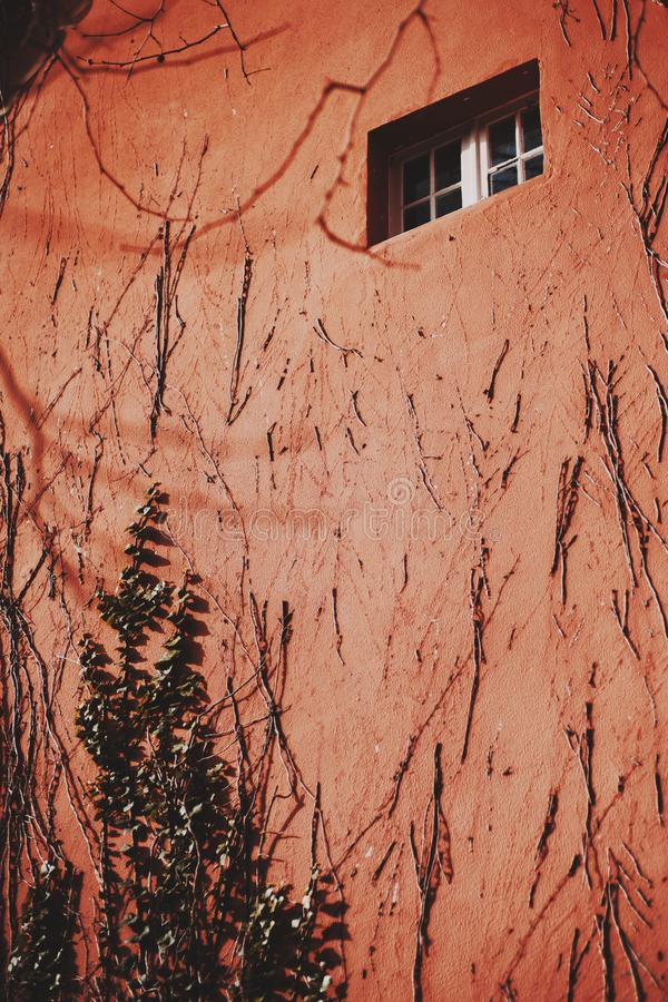 Pared roja con la hiedra y una ventana minúscula foto de archivo