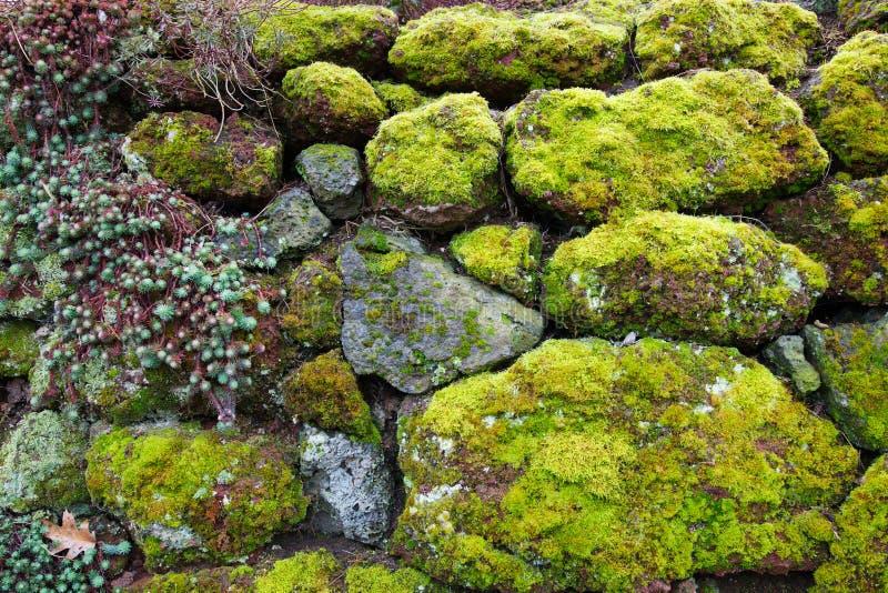 Pared suculenta de la roca del musgo fotografía de archivo
