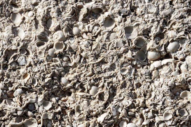 Pared texturizada de la roca de la cáscara, fondo foto de archivo
