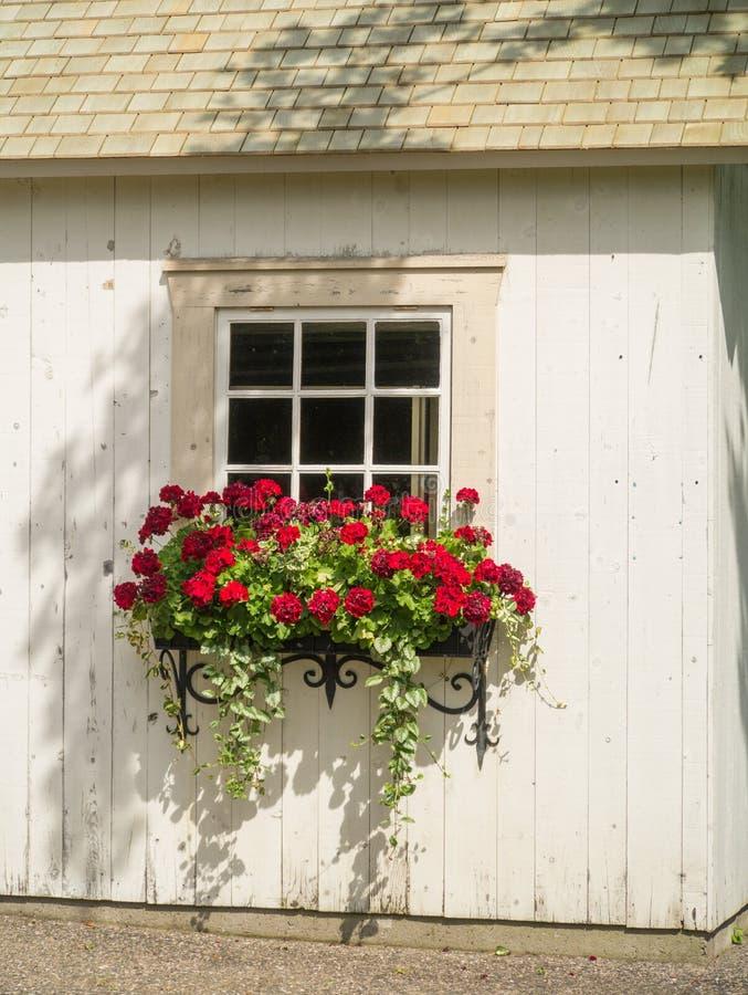 Pared, ventana y flores blancas en plantador de la caja de ventana imagenes de archivo