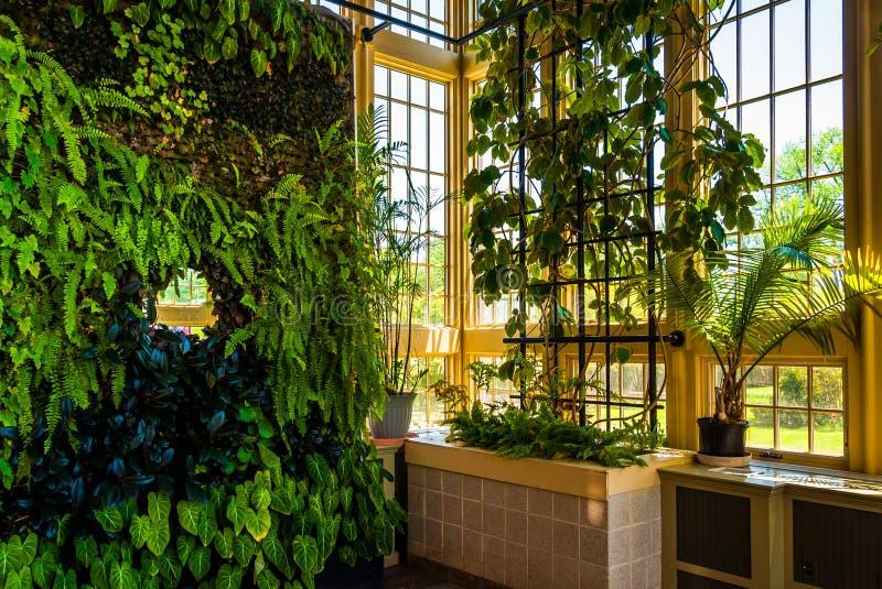 Pared verde en Howard Peters Rawlings Conservatory, en druida fotografía de archivo libre de regalías
